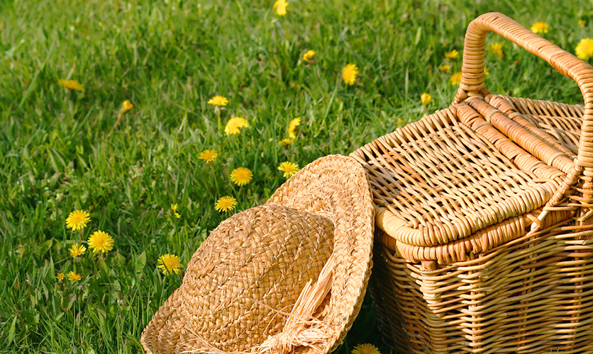 blog_picnic_ppal